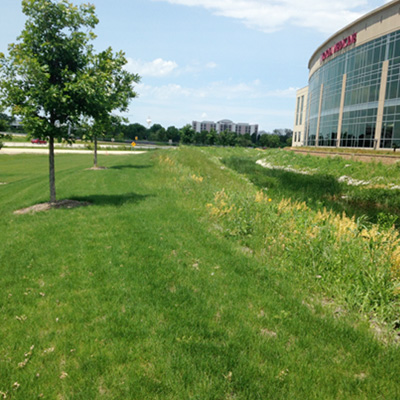 Loyola Burr Ridge | Beary Landscape Management